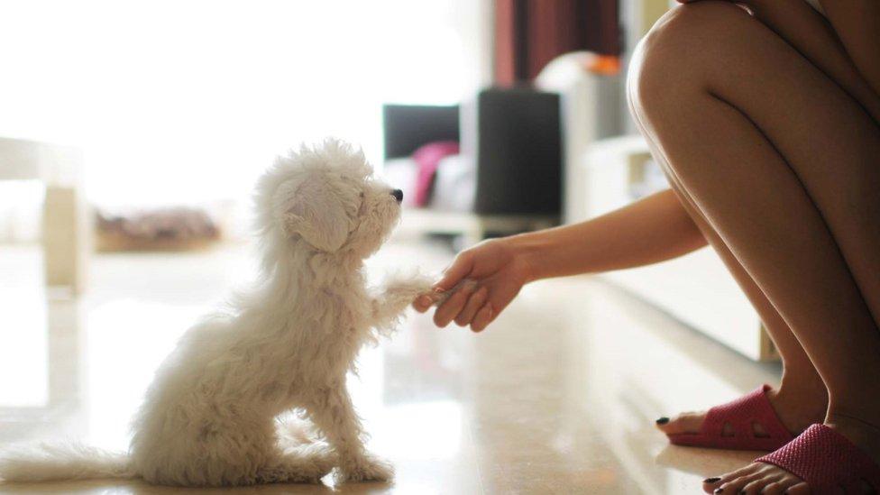 Chica saludando a un perrito