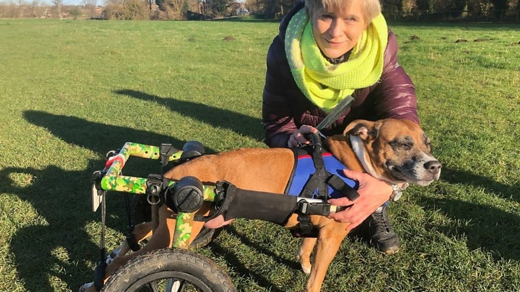 Winston's wheels helps dogs who need wheelchairs
