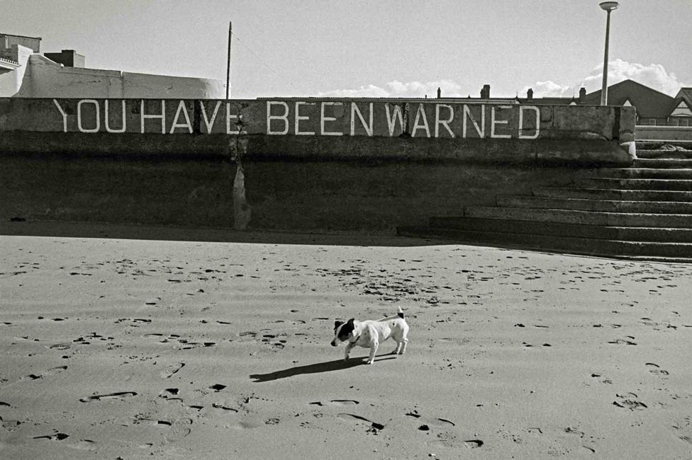 Dog walking on sand in Towyn