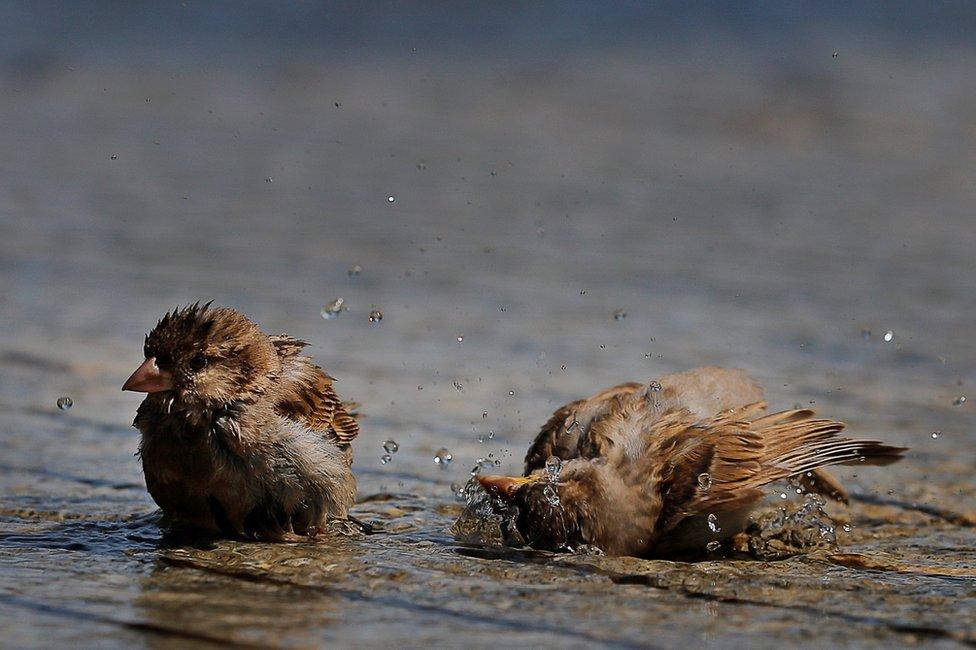 الطيور أيضا لجأت إلى برودة الماء في بوسطن في أول أيام موجة الحرارة.