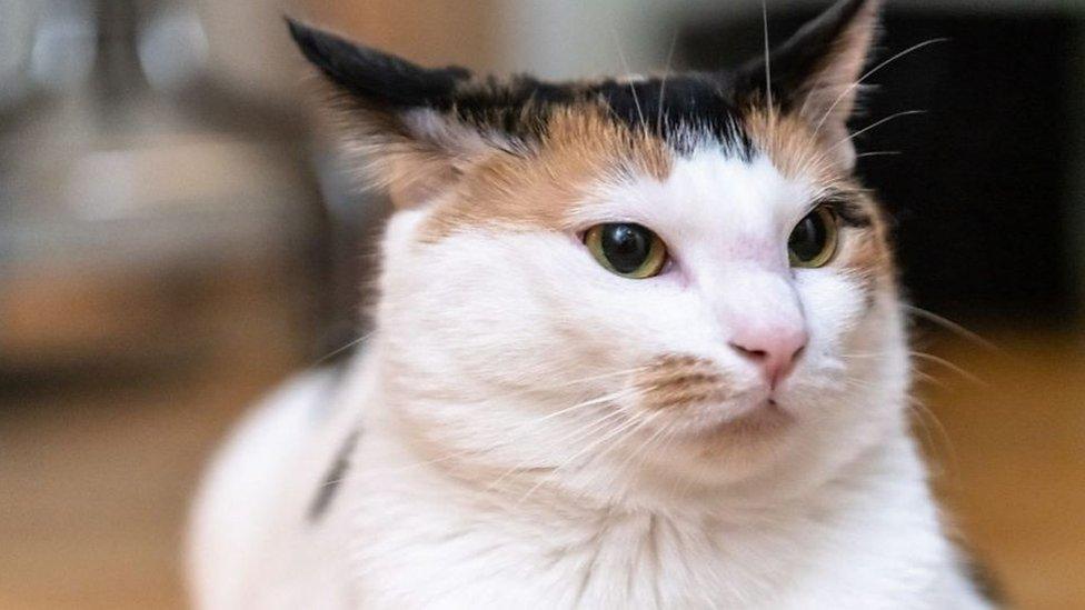貓據稱能夠聽懂主人叫喚他們的名字(Credit: BBC)