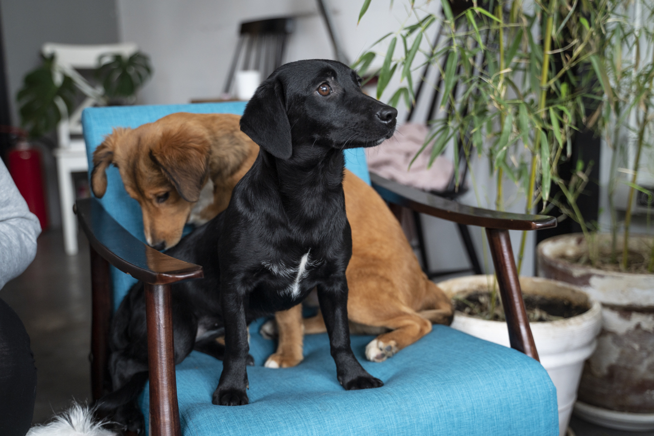 psi za udomljavanje