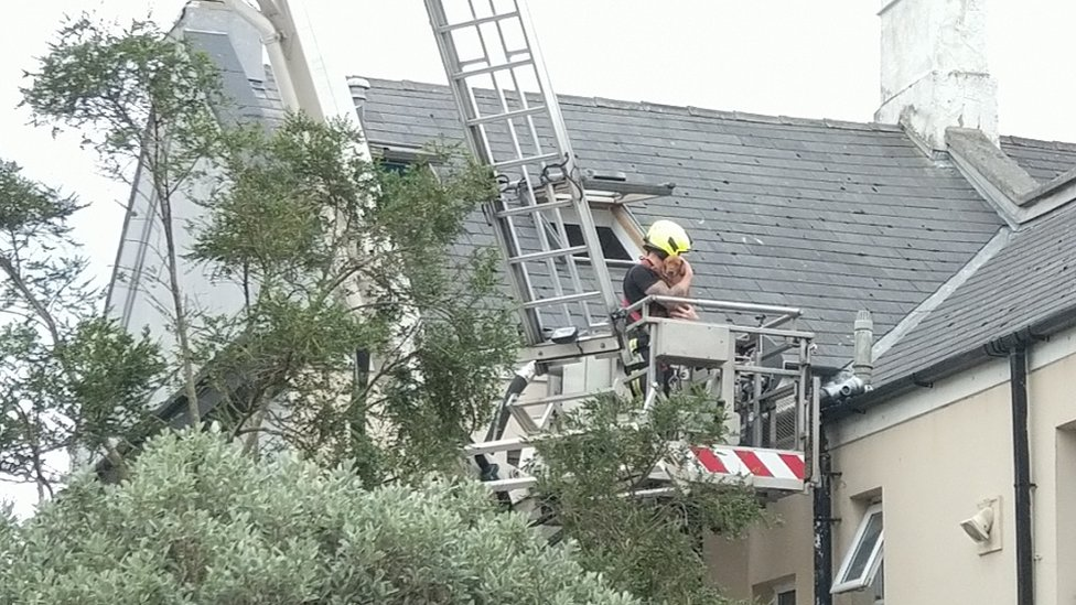 A puppy in the arms of a fireman on a cherry picker