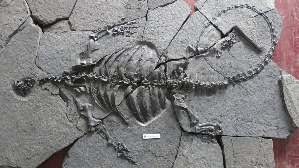 The Triassic turtle fossil found in China