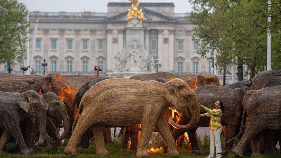 Слоны в Лондоне. Деревянное стадо пригнали к Букингемскому дворцу