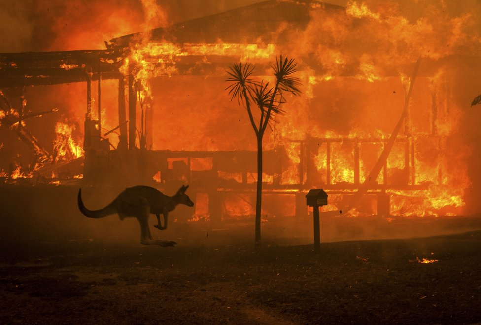 A kangaroo rushes past a burning house