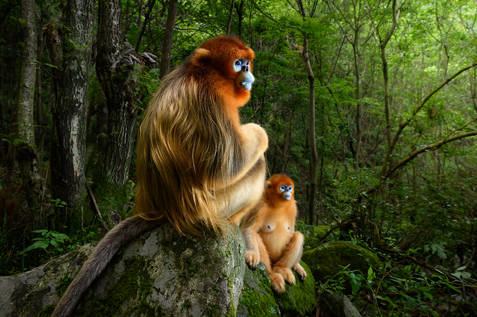 Dos monos catarrinos