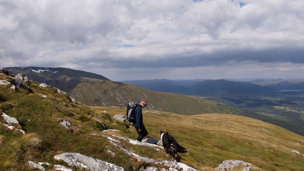Looking for mountain avens in Lochaber