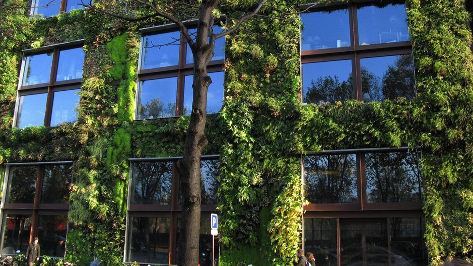Living wall/vertical garden in Paris designed by Patrick Blanc
