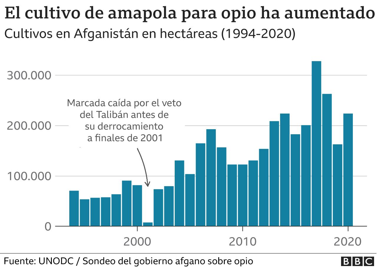 Gráfico de los cultivos de amapola
