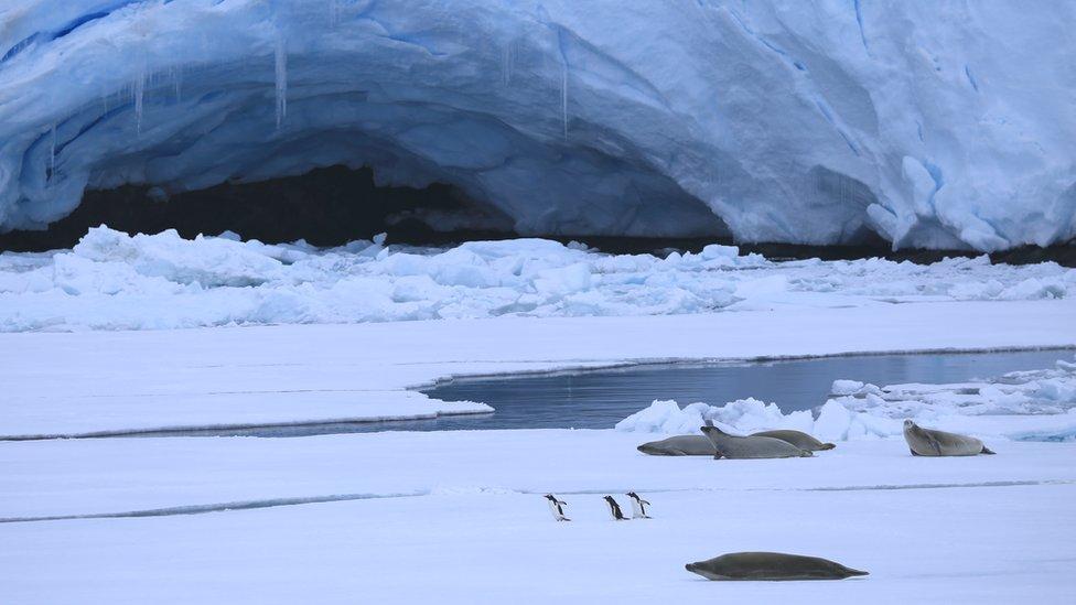 Es laut Antartika (c) Victoria Gill