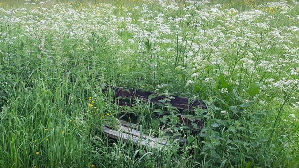 Action plea on Barnsley Gilroyd 'jungle' playing fields