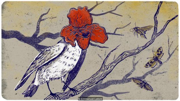 Imitar a las flores: ¿una nueva manera de los pájaros para atraer insectos?