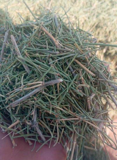 Doğada sık bulunan efedra bitkisi, meth üretiminde kullanılıyor.