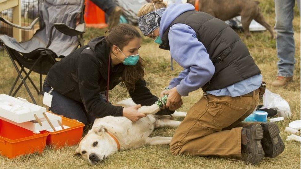 Studenti previjaju opečenog psa