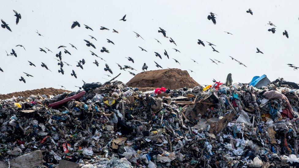 Гид по мусорной реформе: в чем ее суть и почему россияне протестуют