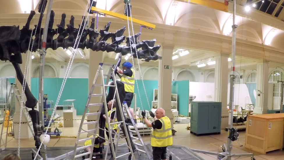 Timelapse footage shows dinosaur take shape