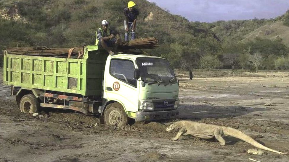 Komodo dan truk di pulau Rinca