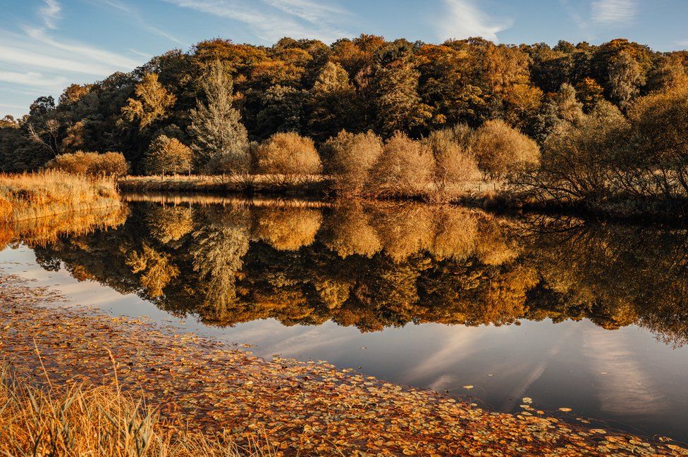 Autumnal trees reflected in water
