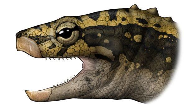 Ilustración artística de Eorhynchochelys sinensis