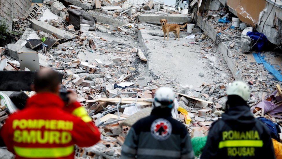 A rescue dog searches for survivors in a collapsed building in Durres, after an earthquake shook Albania, 28 November 2019