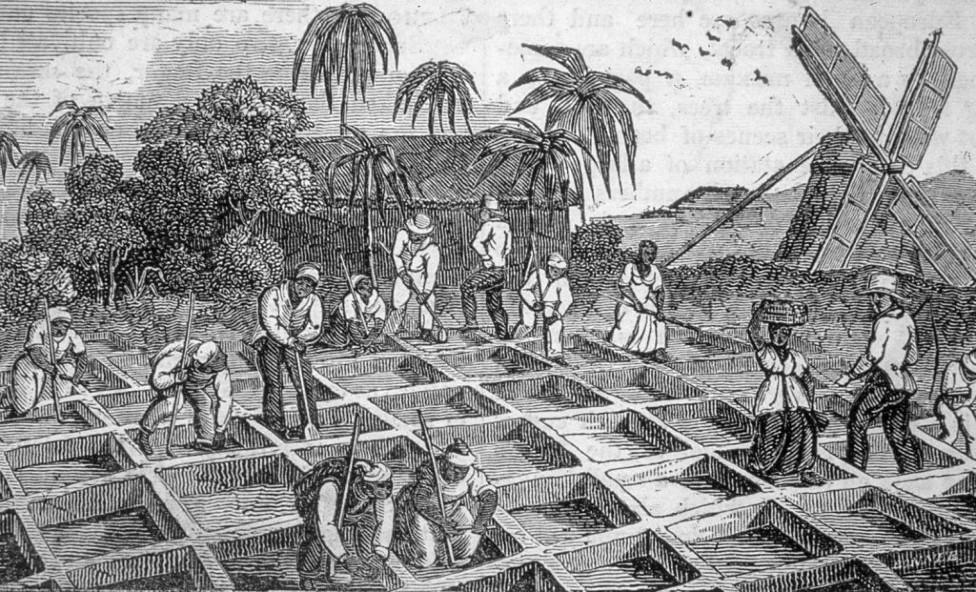Ilustración de una plantación de azúcar en las islas del Caribe, en 1833.
