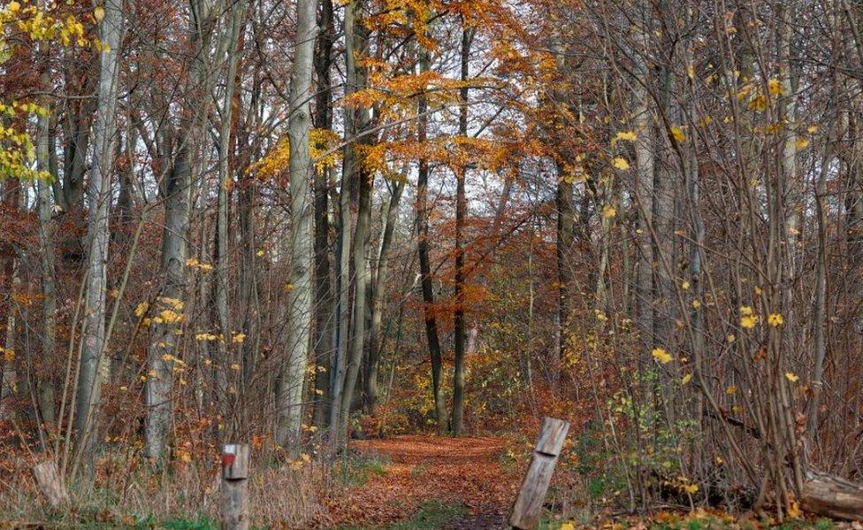 Berlin woodland, 20 Nov 20