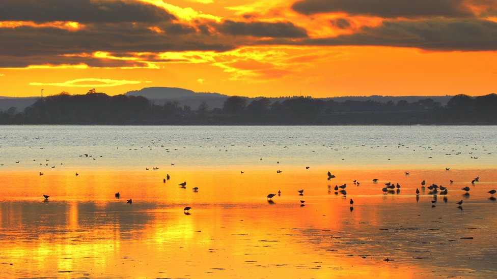 A sunset and birds on the water