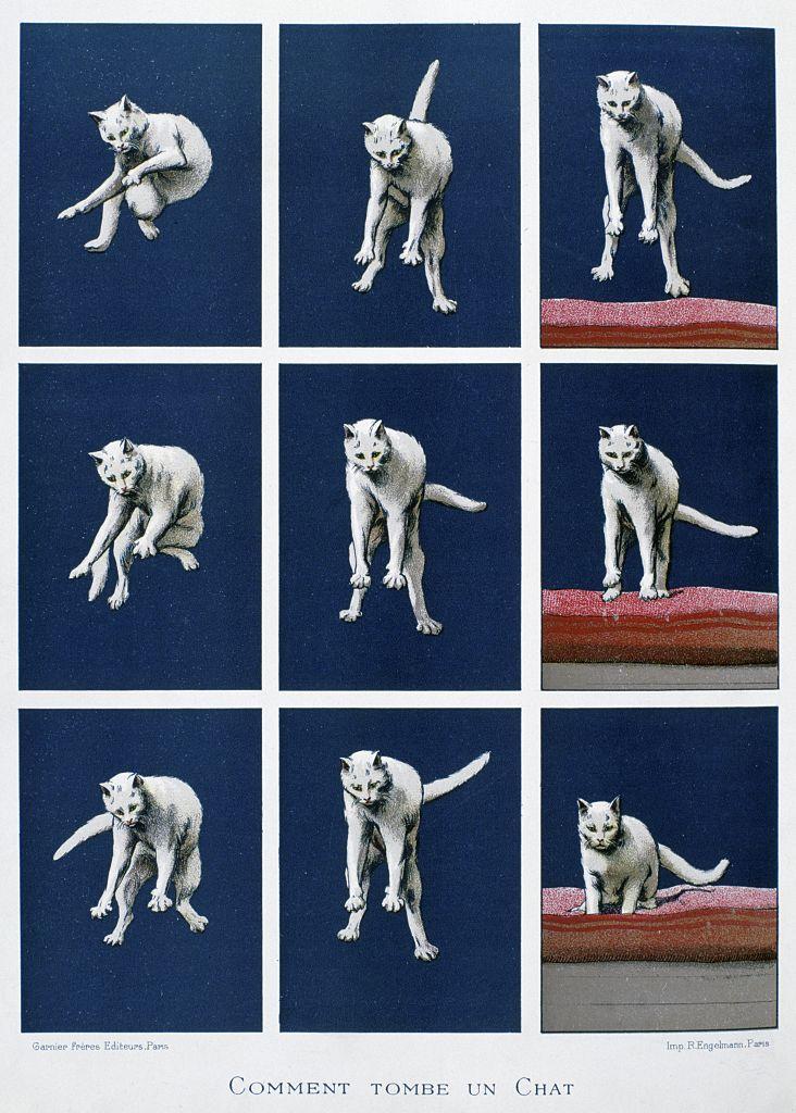 Secuencia de un gato cayendo.