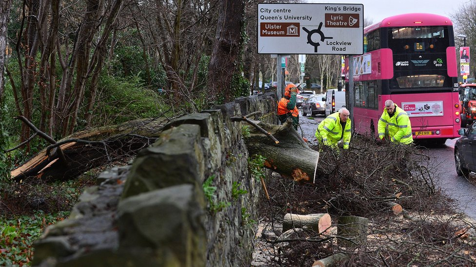 A fallen tree was removed from Stranmillis Road in south Belfast