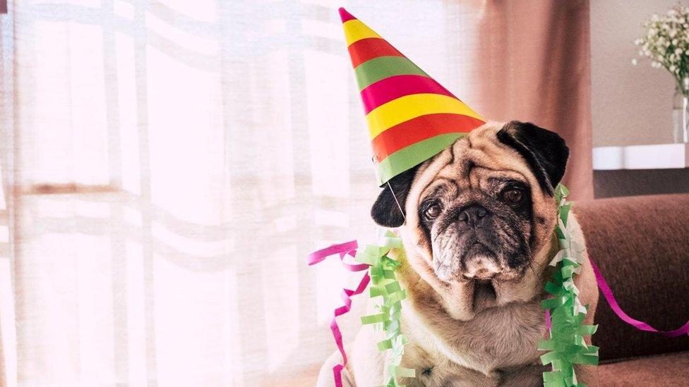 Perro celebrando su cumpleaños.