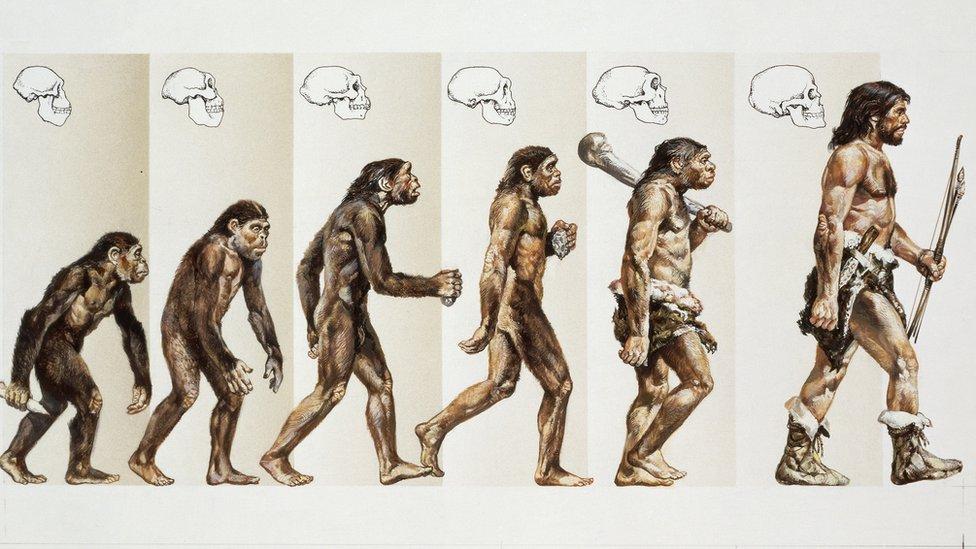 Modern insanın evrimi