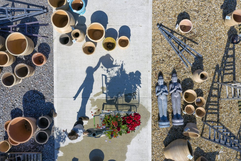 An aerial view of a person watering plants with their shadow cast on the ground