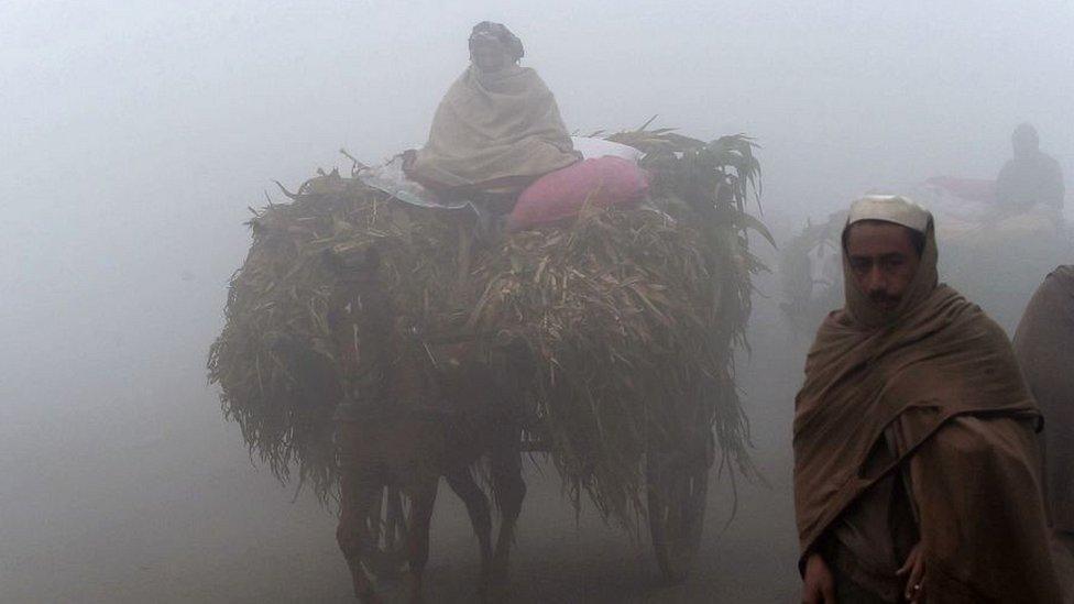 लाहौर शहर की एक बैलगाड़ी