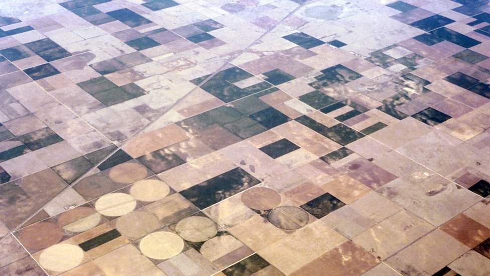 Wheat fields, US (Image: BBC)