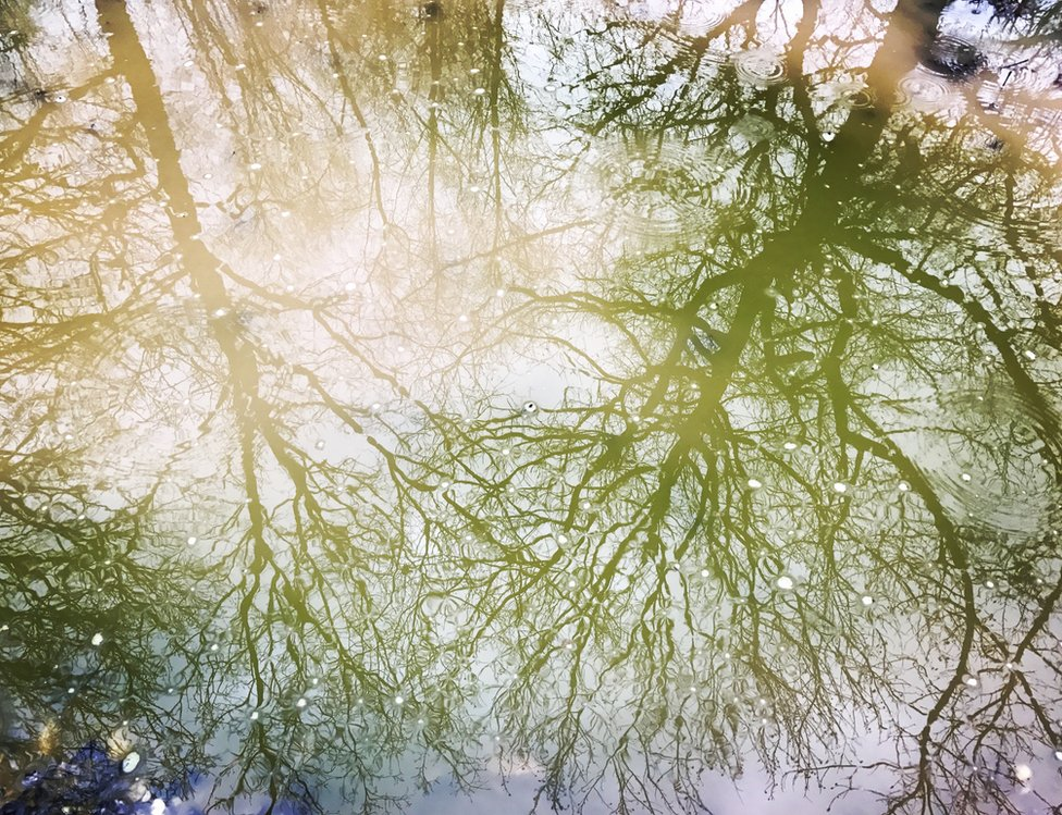 Reflections of trees in a puddle