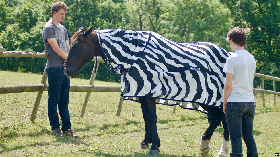 Zebras: Why do they have stripes?