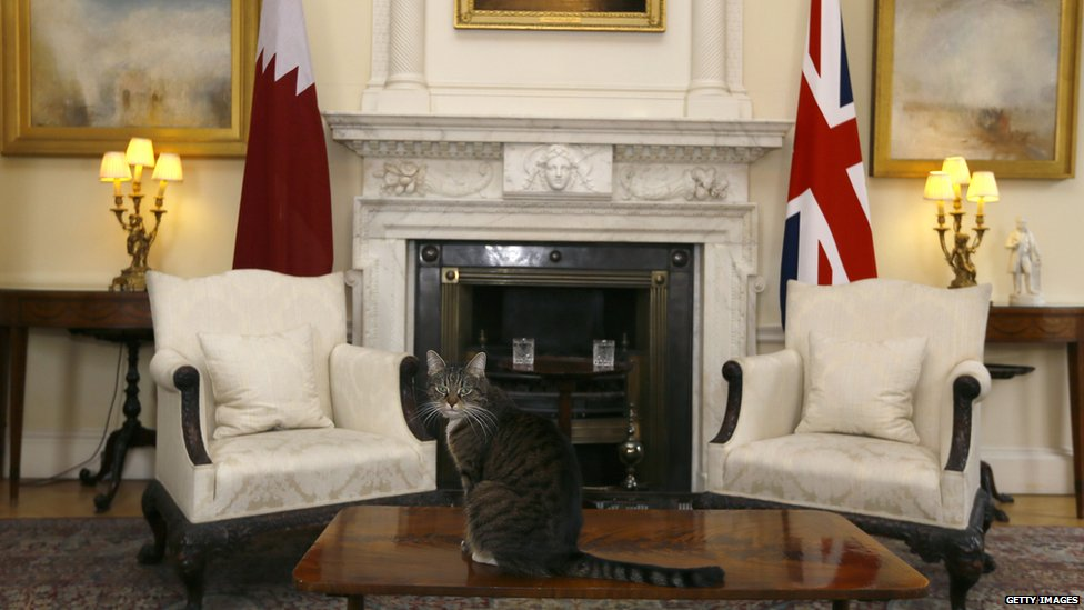 """Freya, is Chancellor of the Exchequer George Osborne""""s cat."""