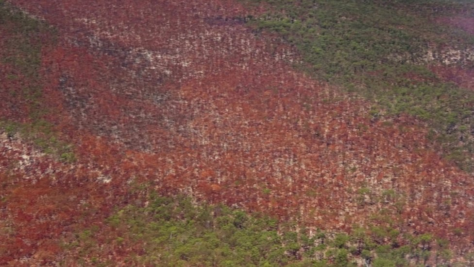 Aerial view of an area affected by a bushfire on Fraser Island, Queensland, Australia