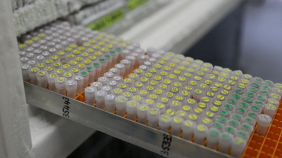 Technicians retrieve frozen DNA samples at the Jodrell Science laboratory at Kew Gardens