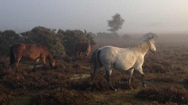 Poachers blamed after pony shot dead in New Forest