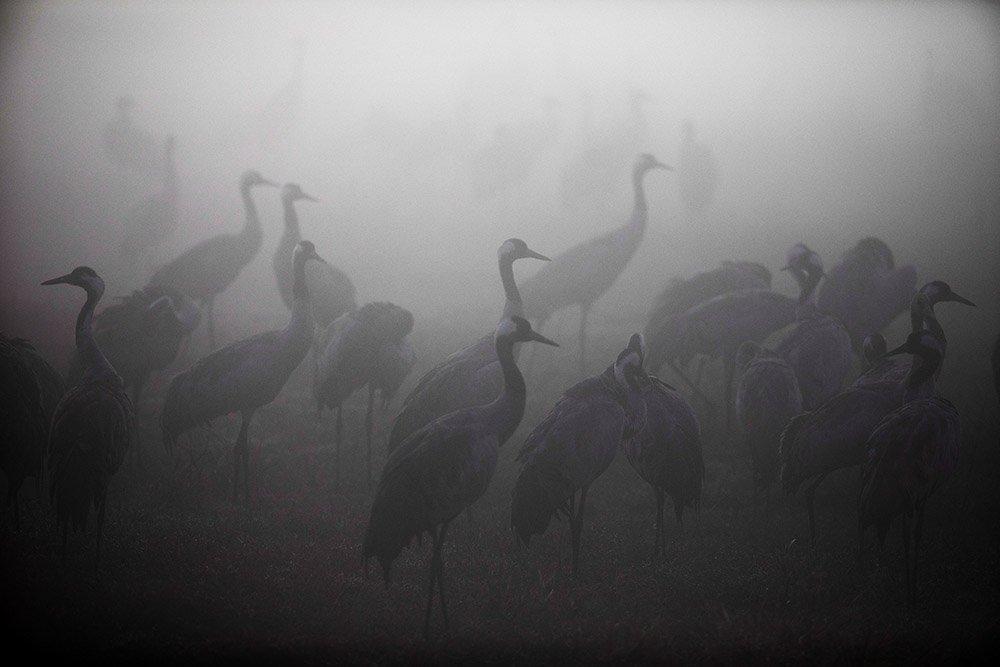 Cranes at a nature reserve