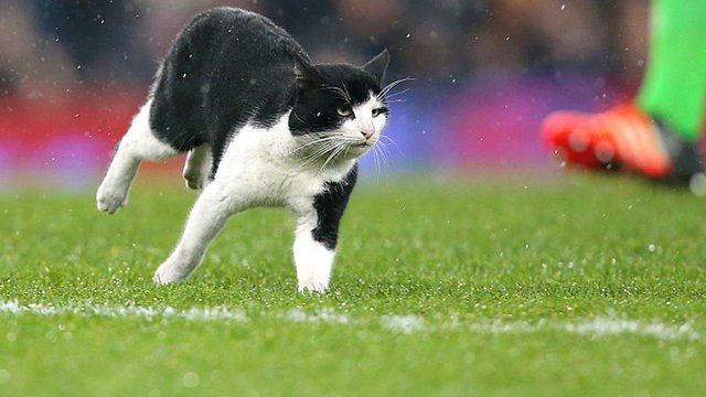 A cat on the pitch during the FA Cup third round match between Everton and Dagenham & Redbridge