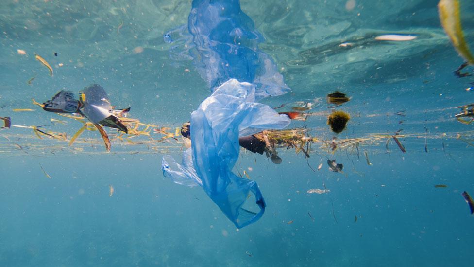 Bolsas y otros fragmentos de basura plástica flotando en el océano