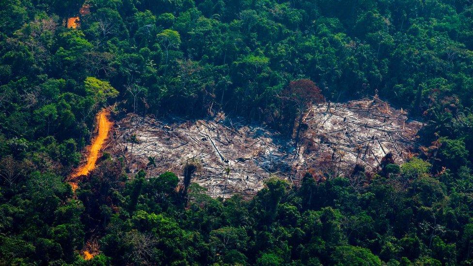 Terrenos desforestado en la Amazonia