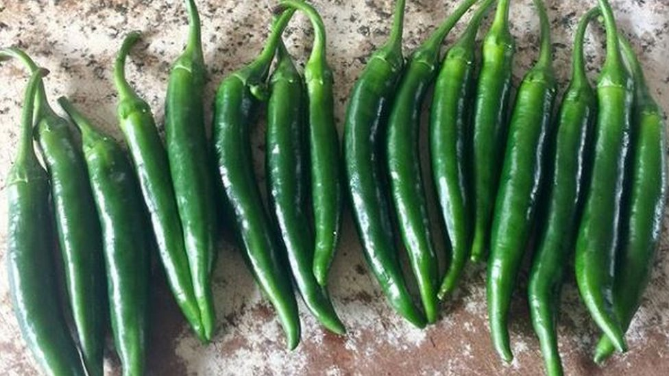 The first Thai Green chillies of the season