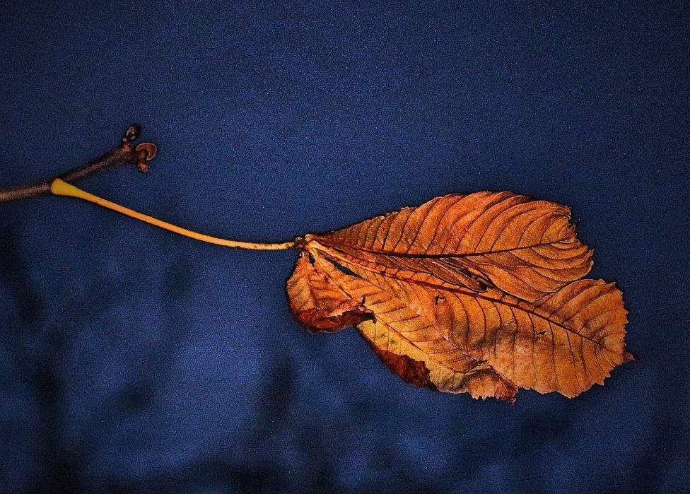 A leaf on a blue background