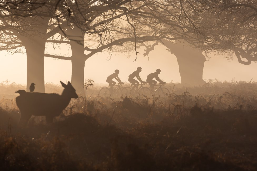 Three cyclists are watched by a young deer in Richmond Park