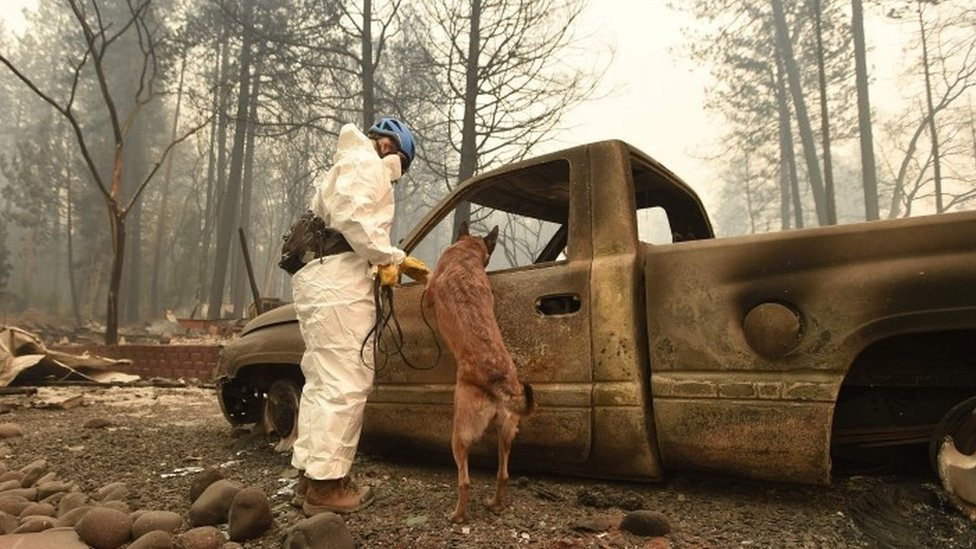 A man and a cadaver dog look for human remains in a burnt-out car