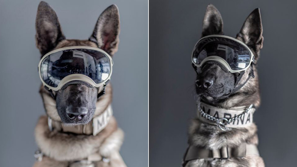 Ecko (left) and Evil (right), two rescue navy dogs pose for photos taken by Santiago Arau